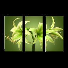 3-dielny obraz na plátne 3x30x70cm KVET zelený