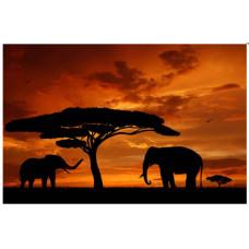 Obraz na plátne 50x70cm AFfrika Slony, oranžovo čierny