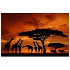 Obraz na plátne 50x70cm AFRIKA ŽIRAFY oranžovo-čierny